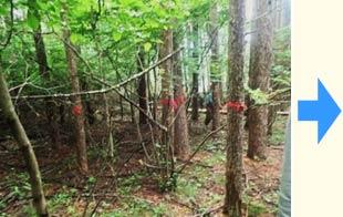 間伐前:混み合い暗い林
