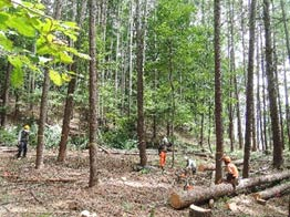 間伐後の明るい林