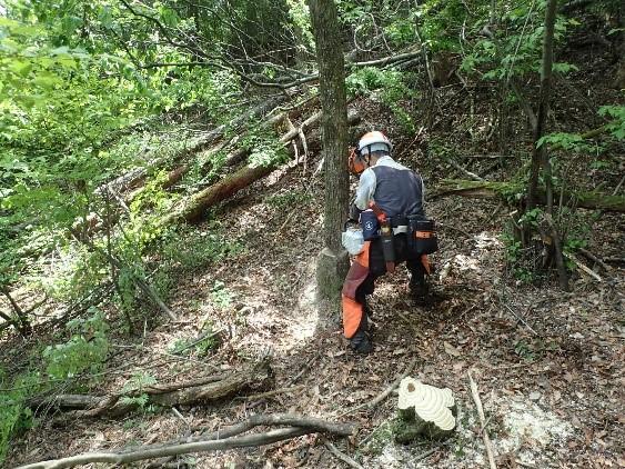 令和2年度森林整備事業部員の募集