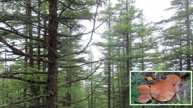 9月28日 市民の森 秋の観察会 参加者募集