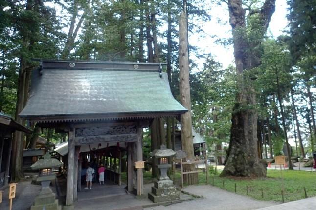 森林文化見学会