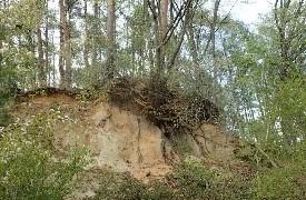 今、森林整備事業部は 10月