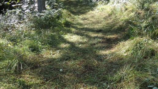 市民の森 草刈り