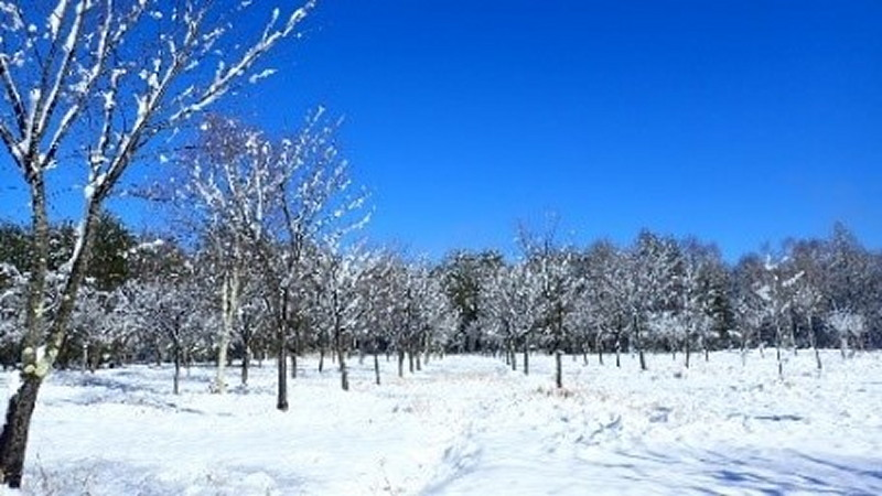 今、森林整備事業部は 12月