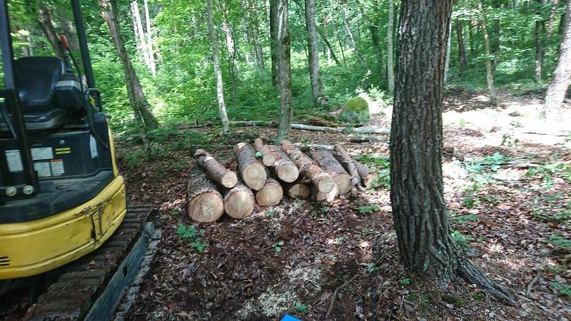 6月27日 市民の森 池周辺の危険木除去