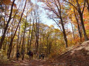 紅葉の森を行く