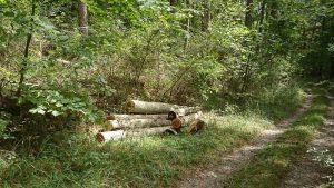 令和2年度 製材場跡横の間伐材
