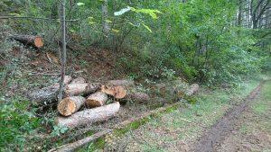 野鳥の小径ガードレール付近に確保したカラマツ間伐材