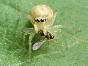 クモの眼 複数の目