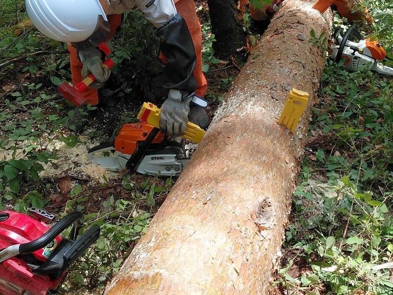 今、森林整備事業部は 7月