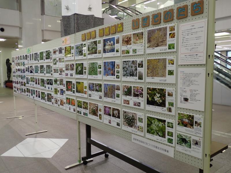 8月16日~25日 市民の森活用促進事業(ロビー展)